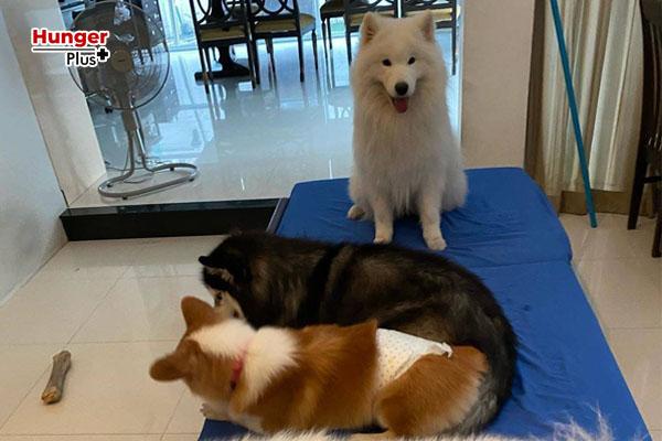 บุ๋ม-ปนัดดา ควัก 8 หมื่นรักษา ลุงเค็ม หมาแสนรัก ข่าวออนไลน์ ข่าวบันเทิงดารา อัพเดทข่าวกีฬา