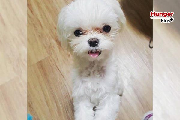 Coco เจ้าหญิงของ Got7 เจ้าหมาน้อยที่เหล่าอากาเซ่ทุกคนอิจฉา ข่าวออนไลน์ ข่าวบันเทิงดารา